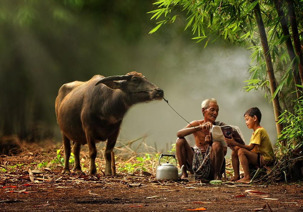 Pendidikan Desa