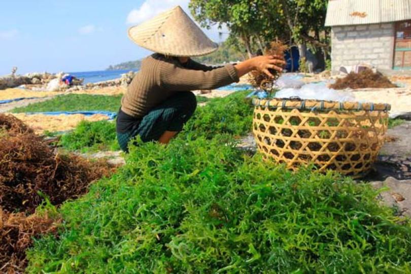 Produk Desa Sebagai Primadona Ekspor