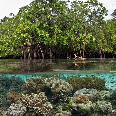 Pemanfaatan Hutan Mangrove Untuk Pengembangan Desa Pesisir
