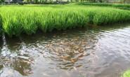 Mina Padi: Melipatgandakan Keuntungan Petani