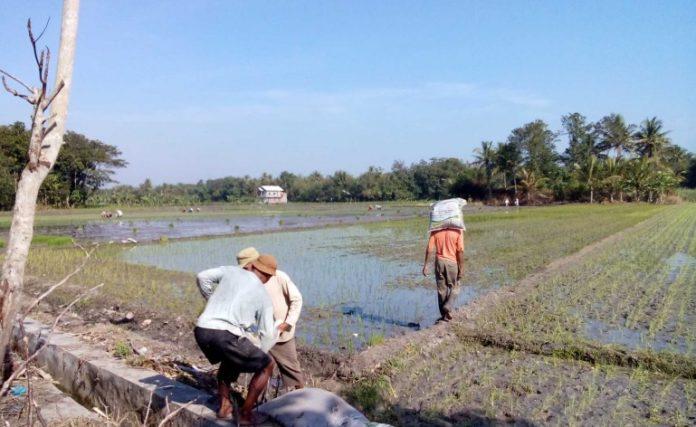 Padang Balua Contoh Desa Mandiri Pangan