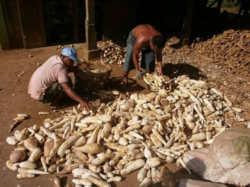 Pabrik Tapioka, Cara BUMDesa Gumelar Menggenjot Produk Desa