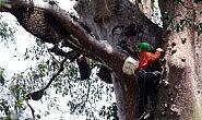 Hikayat Madu Hutan Kalimantan, Produk Desa Melimpah Muara Samu