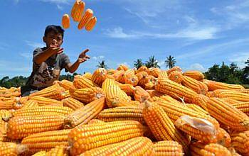 Jual Online Produk Pertanian