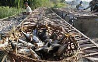Cicipi Ikan Kayu Aceh, Kuliner Tradisional Pemadam Kelaparan di Masa Darurat