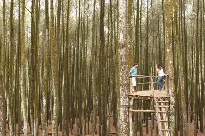 Eksotisme Hutan Pinus Mangunan, Favorit Selfi dan Pre Wedding