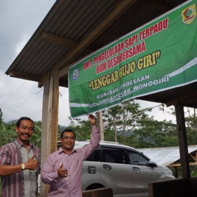 BUMDES Bersama Lenggar Bujo Giri Wonogiri Sukses Kembangkan Usaha Ternak Sapi