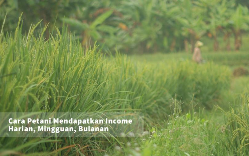 Cara Petani Mendapatkan Income Harian, Mingguan, Bulanan