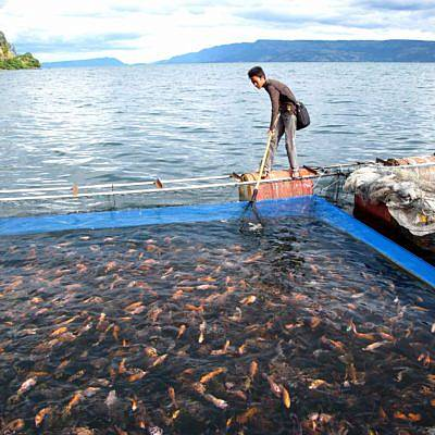Sekarang Para Pembudidaya Ikan Kecil Bisa Dapatkan Asuransi