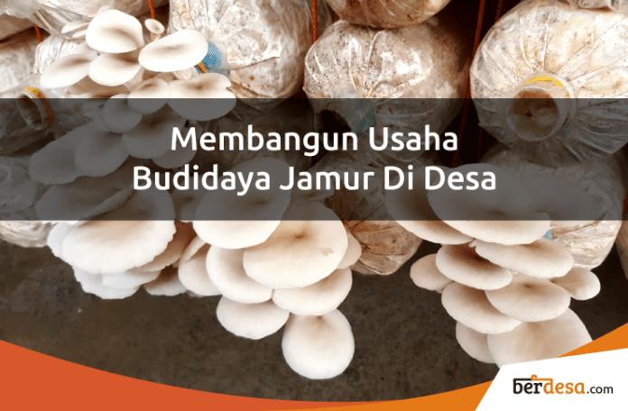 mengembangkan usaha budidaya jamur tiram di desa - berdesa.com