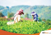 7 Startup Agribisnis Yang Ada Di Indonesia