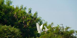 Desa Blekok, Destinasi Wisata Baru di Desa Klatakan
