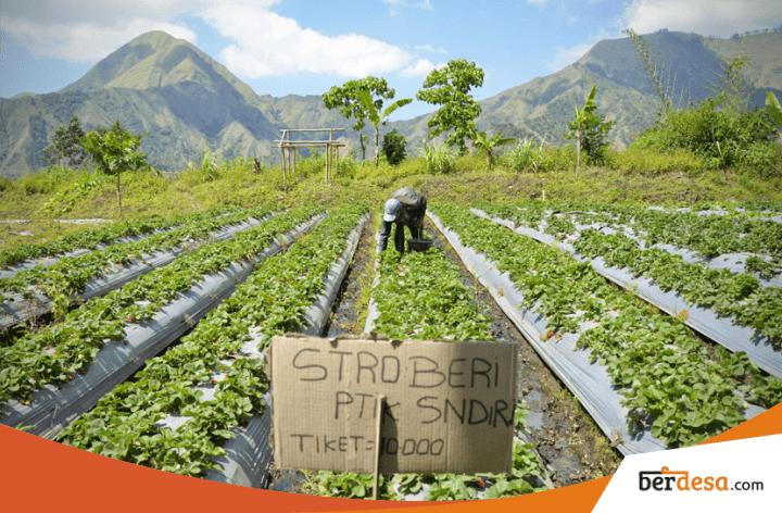 Agrowisata Peluang Usaha Desa Yang Menjanjikan Di Tengah Hiruk Pikuk Kesibukan Berdesa